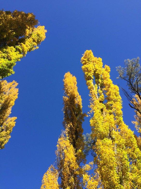Yellow Trees 1