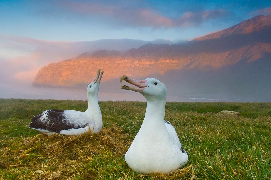 07_unterthiner_albatross