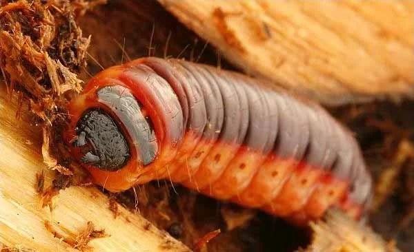 Come combattere gli insetti che mangiano il legno
