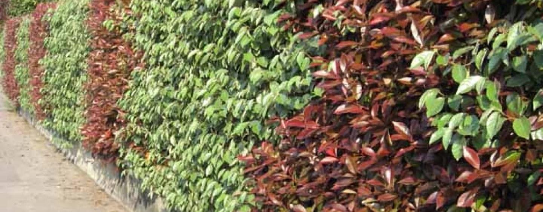 Piante Sempre Verdi Da Giardino Piante Da Giardino Fiorite Piante