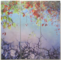 """Tara McDermott   Consequences  Photo and Encaustic   36"""" x 36"""" (triptych)   2016"""