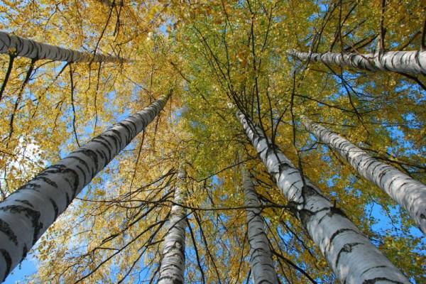 Big-Ass Tree