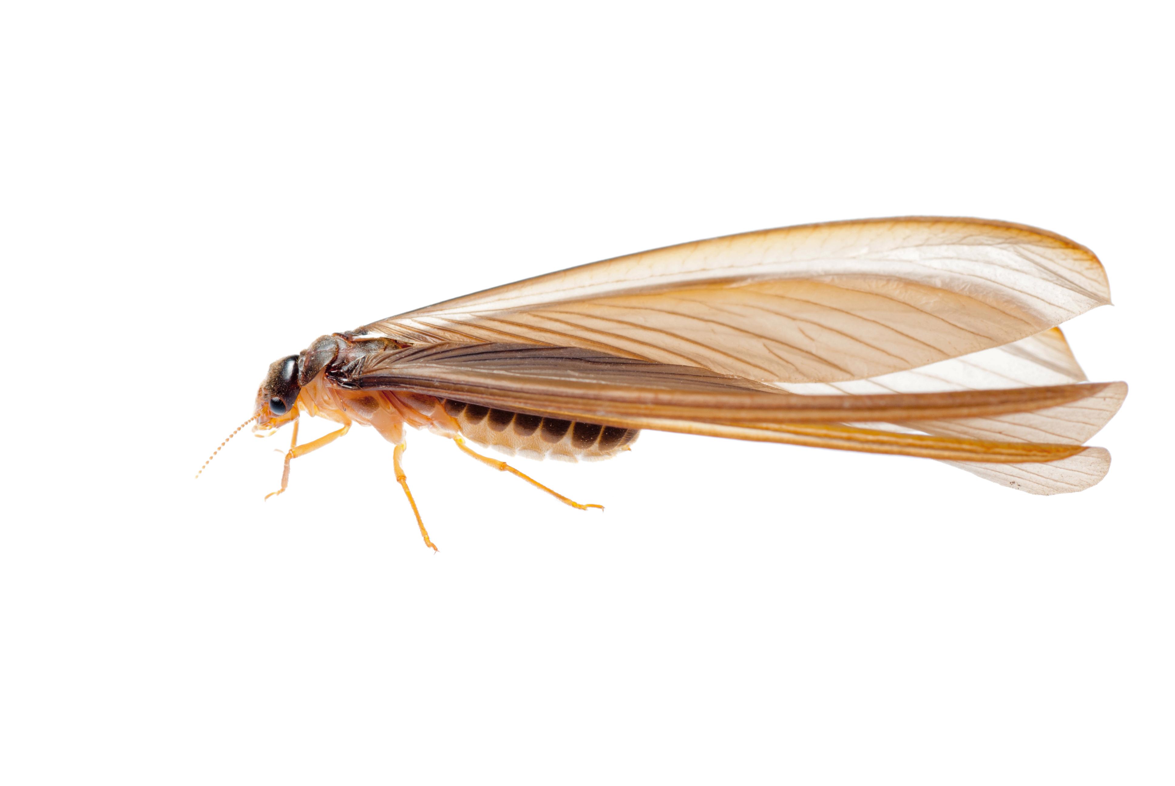 Mosquito Squad of Columbia introduces comprehensive