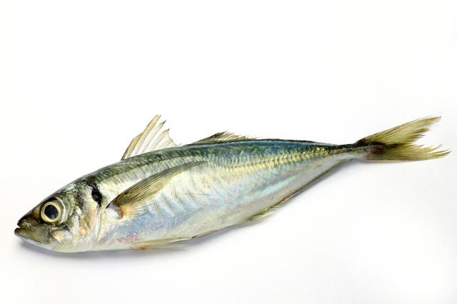 アジ|魚 | あすけんダイエット