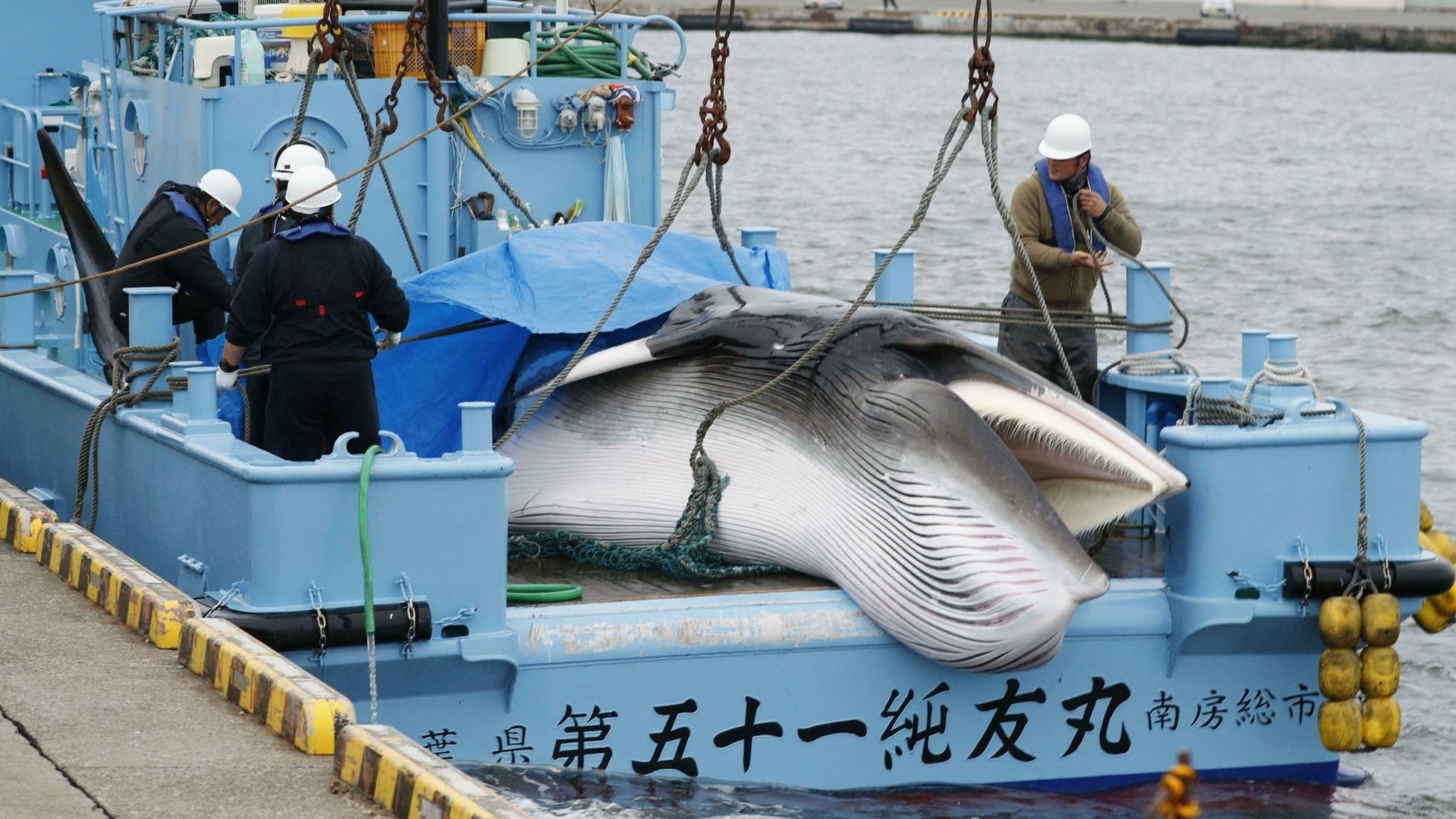 Petition: Ask Japan to Stop Whale Massacres!