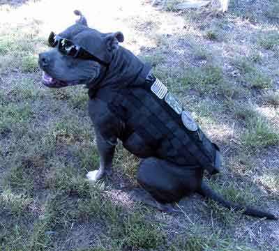 Spartan Tactical K9 Operator Molle Vest Harness For Dogs