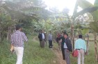 """Mr. Bhuban Karki, NSC member, Operation Foal Point, Ministry of Finance, Foreign Aid Coordination Division (shown above, grey sweater): """"I am very inspired by the progress in the Handikhola and Rabang. With so little money, so much of work. The initiative is able to adapt local farming technology of local banana farming and broom grass plantation and locals are earning income."""" Successful COMDEKS projects will be used as models for replication and upscaling in other parts of the world. Knowledge products, such as case studies and video documentarie, will help disseminate learning."""