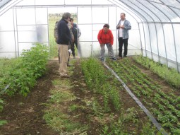In order to combat land degradation and improve livelihoods, greenhouses have been set up to raise fruit and seedlings for sale in local markets