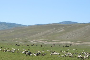 Within the last two decades, pastures have depleted at an increasing rate due to harsh weather conditions and an increase in the concentration of livestock and people.