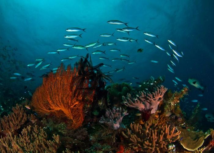 bangka island diving package