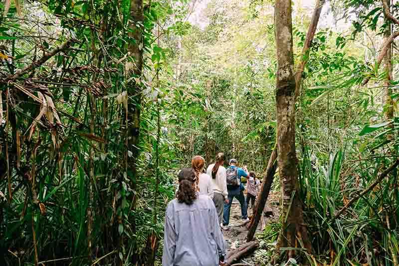 Nueva gira por Orangutanes en Borneo