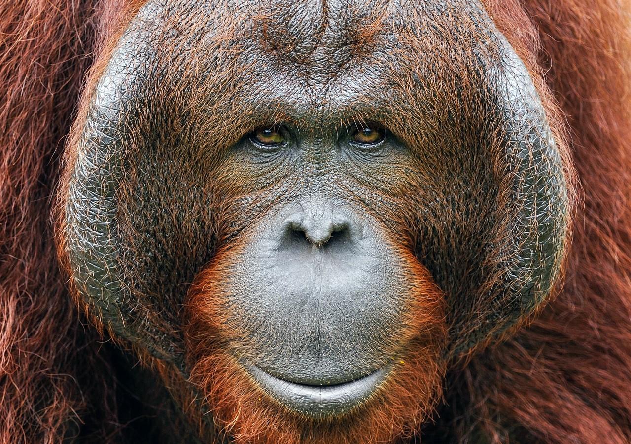 Wildlife travel in Indonesia