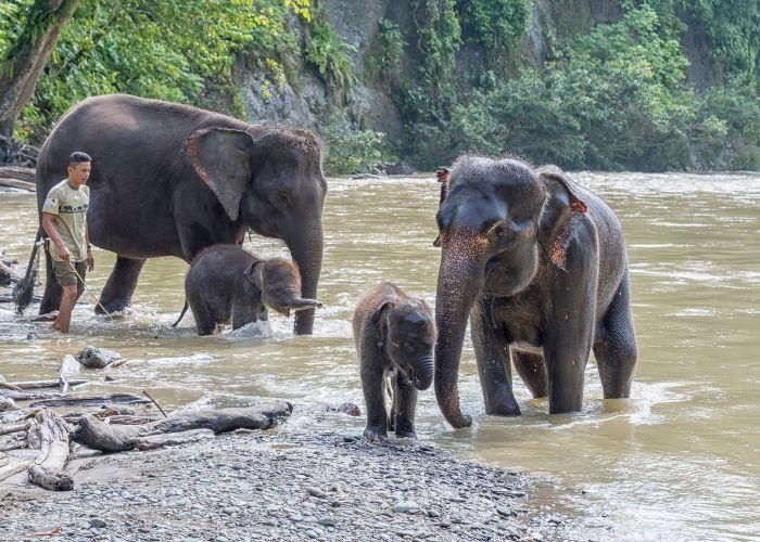 tangkahan elephants tour through Sumatra