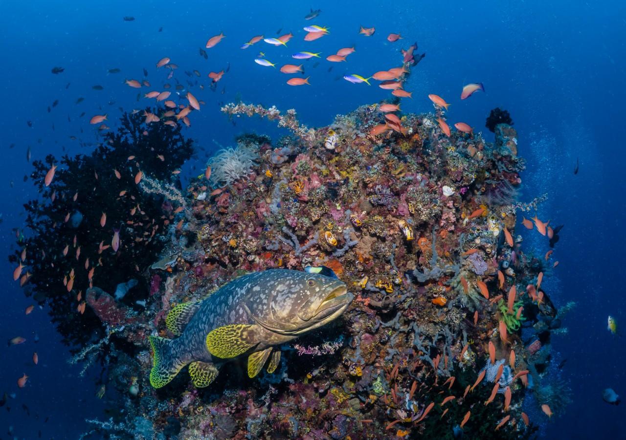 komodo diving adventure
