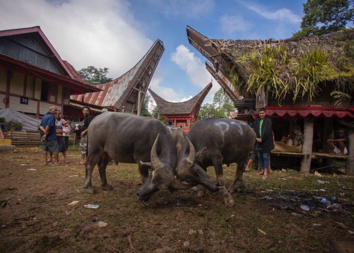 authentic toraja tour experience