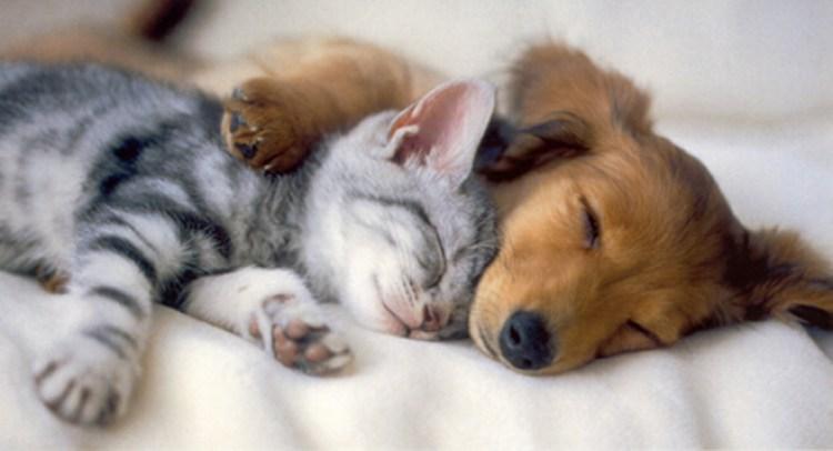 dog-sleeping-with-kitten.jpg