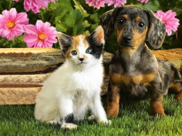 Kittens-Puppies-pictures-cutedogs-and-pets -1024-768.jpg