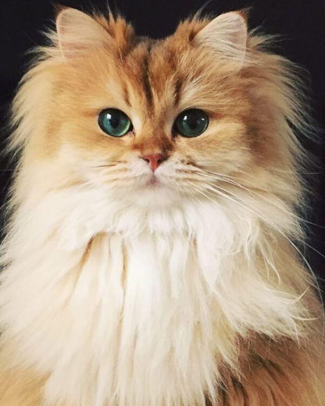 Smoothie-the-Cat-57ed73115f9b586c35021ad5.jpg