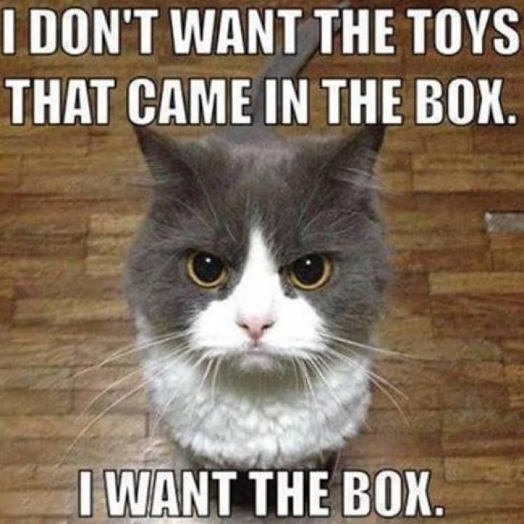 Top-30-Funny-Cat-Memes-Funny-humor.jpg