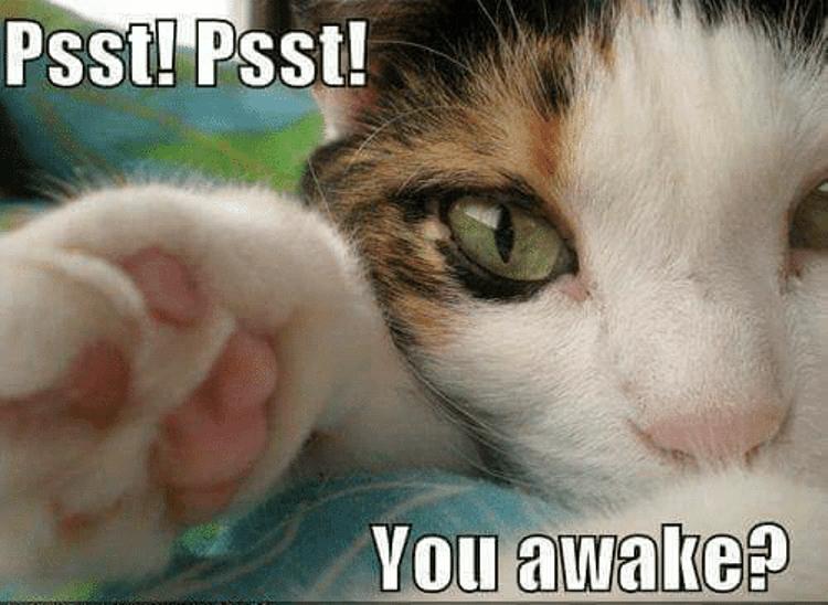 psst-psst-you-awake-canha-scheeze-urger-com-20801632.png