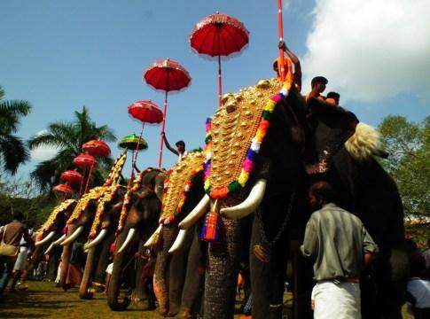 Elephant in Kerala
