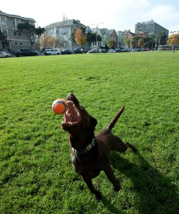 Exercise your dog to help cure dog anxiety
