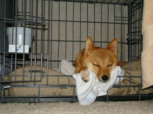 How to crate train a dog so he sleeps like this.