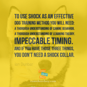 If you have these three things you don't need a shock collar