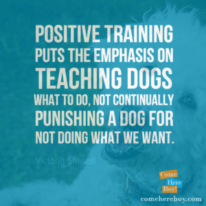 Teaching Dogs What to Do