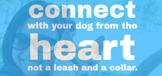 Reach deeper during training and find a way to connect with your dog from the heart, not a leash and a collar