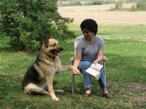 german shepherd temperament test for therapy work