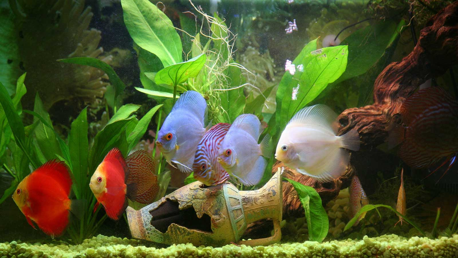 Flipper Fun The Best Tropical Fish For Beginners