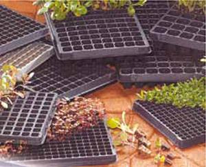 #Invernaderos. Charolas de plástico para germinación