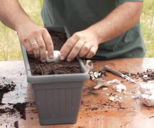 10 plantas medicinales para tu casa