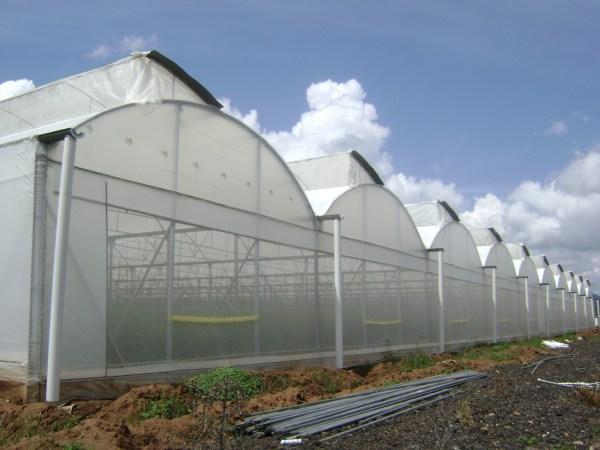 Invernadero tipo túnel con ventila cenital