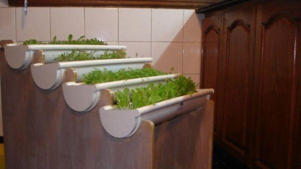 Cultivos sin tierra, nueva alternativa para el balcón o el patio