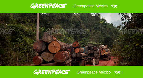 bosques tala