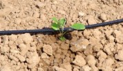 Agrocottem_en_horticultura_intensiva4-300x174