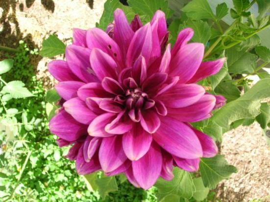 12 Plantas De Sol Para El Verano Las Opciones Para Dar