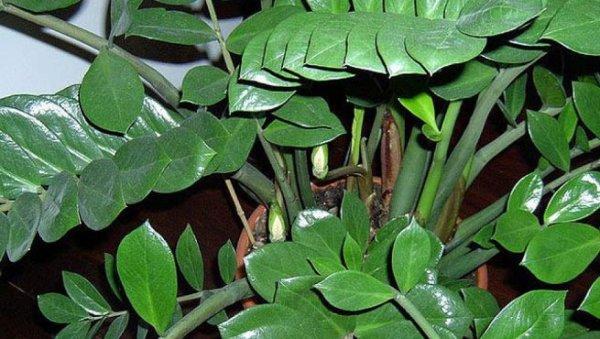Plantas Venenosas en nuestros hogares