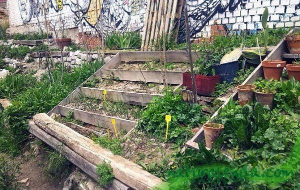 Huertos urbanos caseros. El mundo vegetal es una de las mayores fuentes de salud, de alimentos y de hábitat en todo nuestro planeta