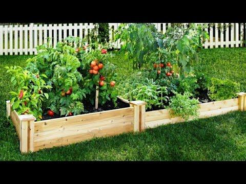 Mi huerto. Los 5 vegetales más fáciles de cultivar en tu casa