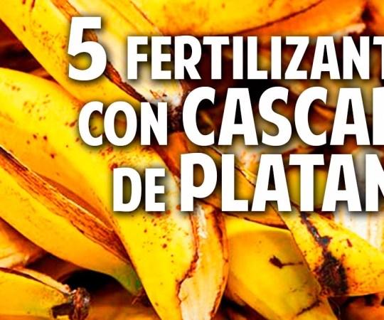 5 fertilizantes con cáscara de plátano – Potasio – Más Frutos