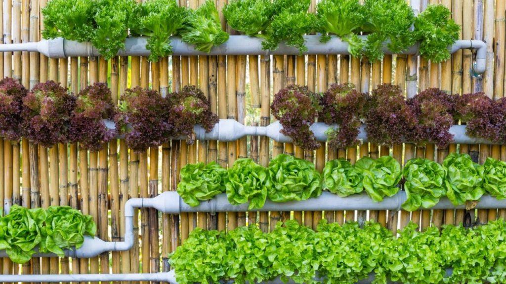 Aprenda a Fazer a sua Horta Vertical