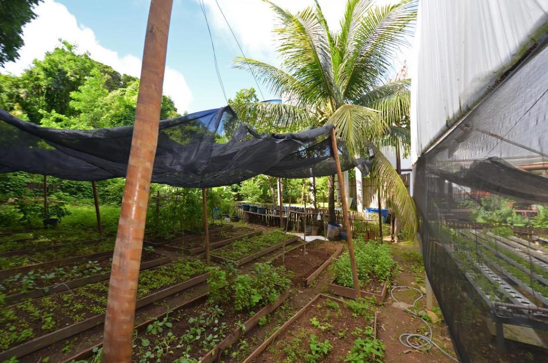 Teju-Açu-horta-fernando de noronha- comerdomirviajar.com (8)
