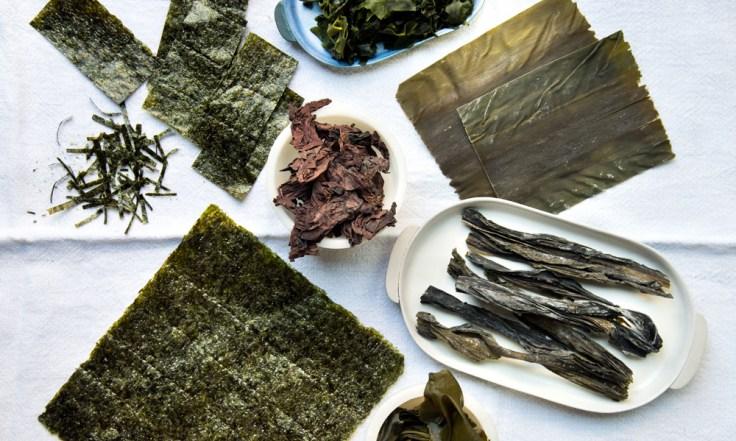 Varios tipos de algas