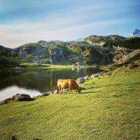 Qué ver en Asturias y qué hacer si te alojas en Cangas de Onís