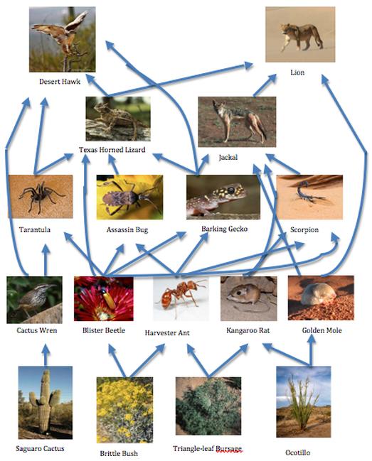 desert hawk diagram chevy prizm parts plants and animals the namib