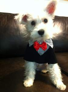 Dog in a suit. Dressed up dog. Dog in clothes.