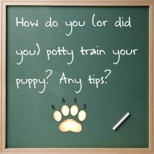 Dog Potty Training Blues :(